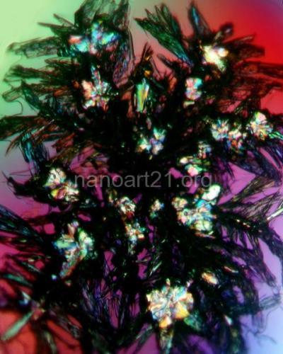 Imameddin Amiraslan - Flowers