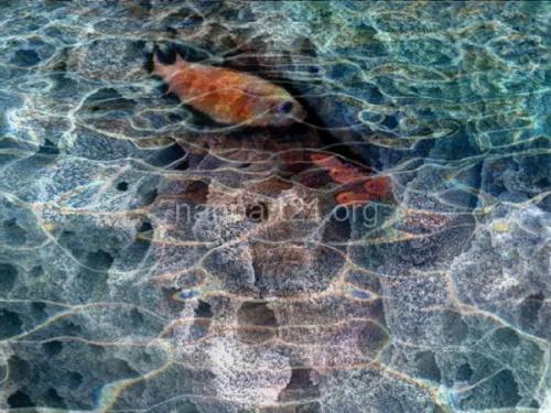 Vijay Kohar-Under Water 2006-nanoart